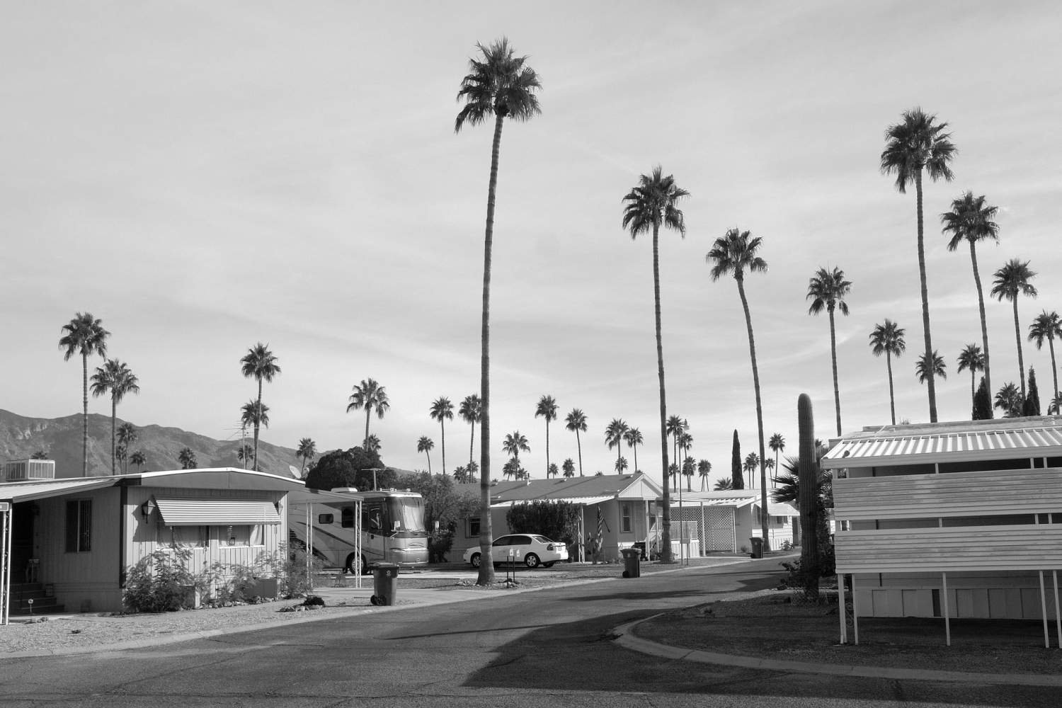 >Bungalow homes and palm trees in Tucson, Arizona.
