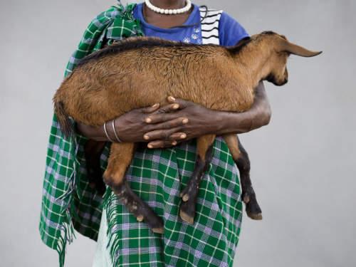 """Chris de Bode's """"Goat Power"""" commission on The Guardian"""